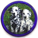 Murrini Dalmation Puppies by Mario Dei Rossi